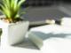 succulent plants blog banner